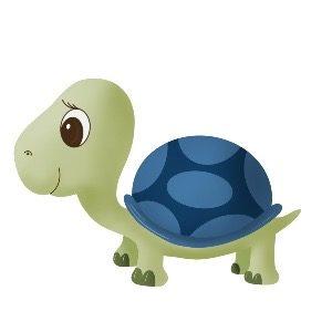 Schildkrötenjunge